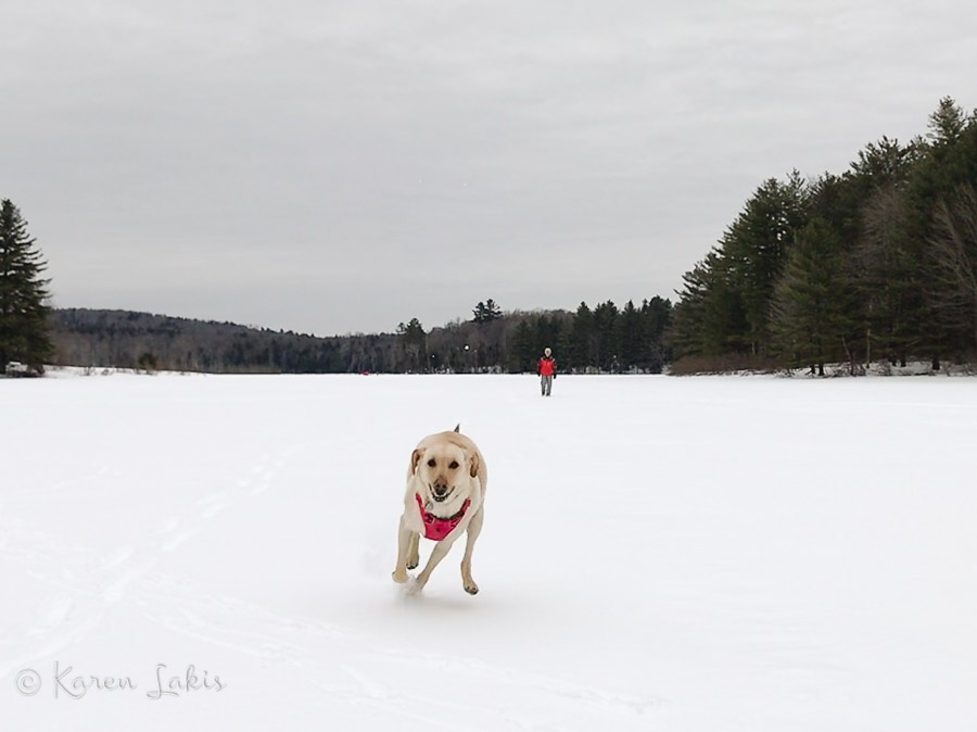Chessie on Gale Meadow