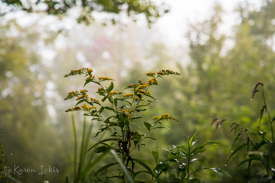 wildflowers in the morning mist