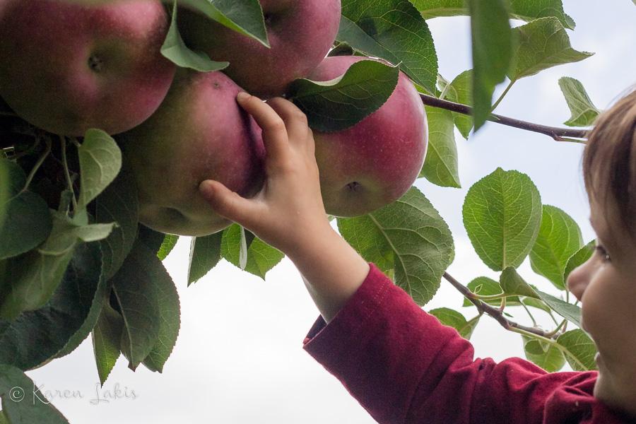 Ella picking an apple
