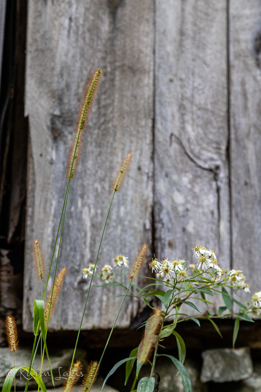 weeds against a rustic shed