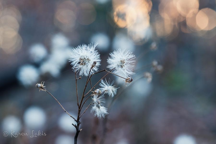 blurry weeds