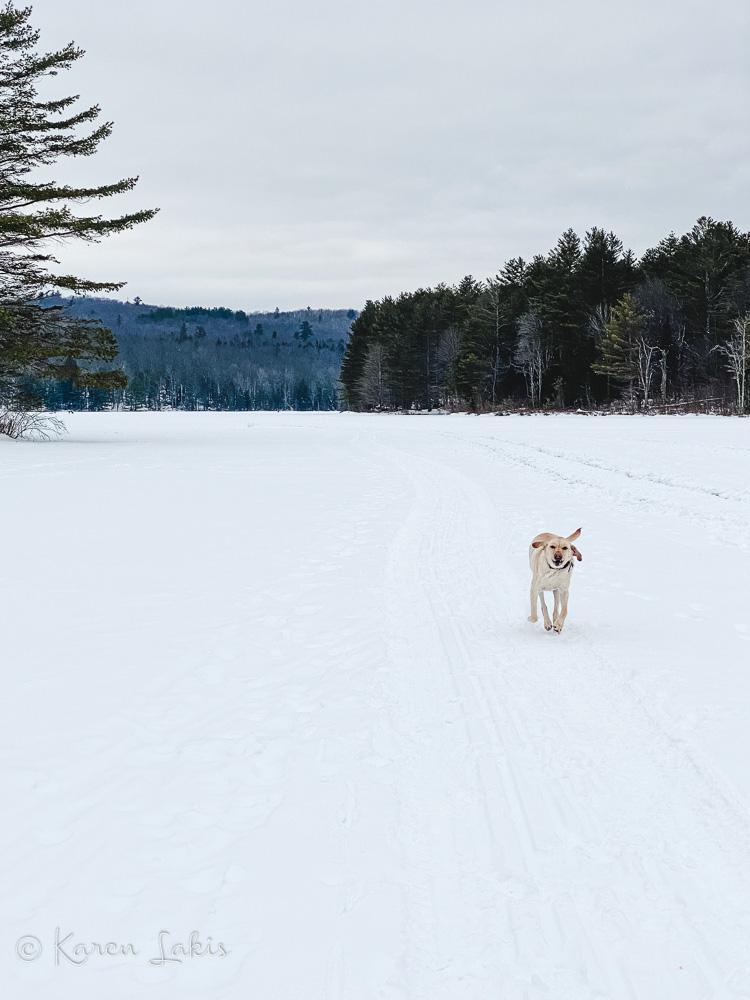 Chessie on the lake