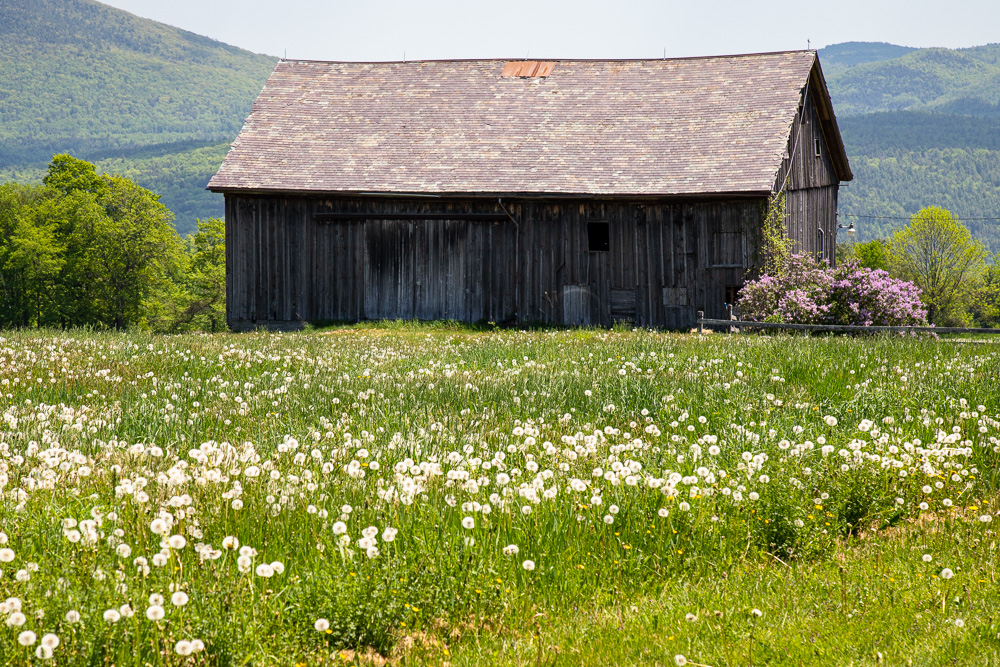 barn with a field of wild flowers