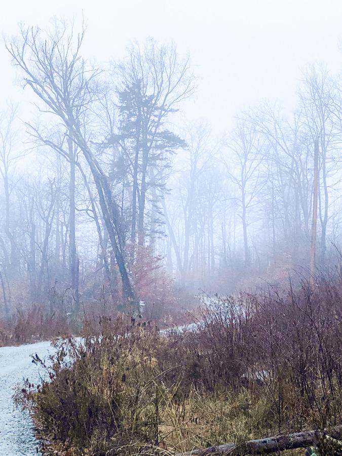 dreary misty morning