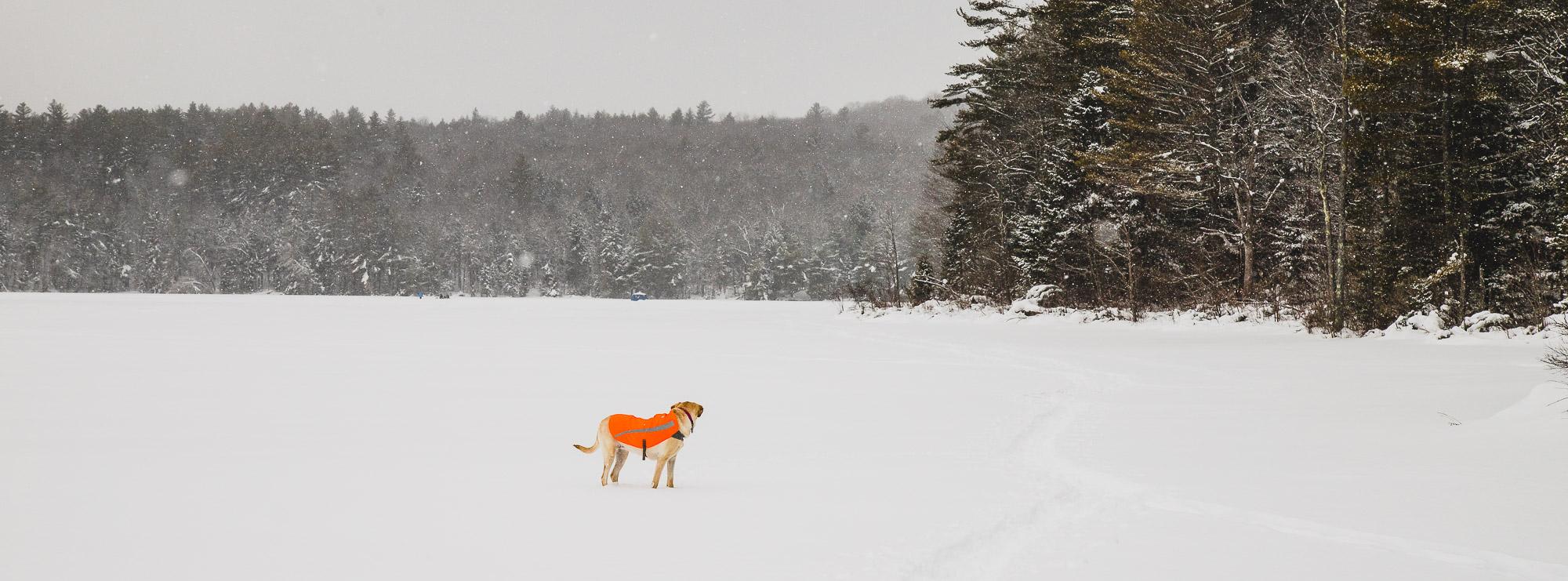 chessie on a frozen lake
